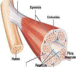 El Musculo. Conclusiones